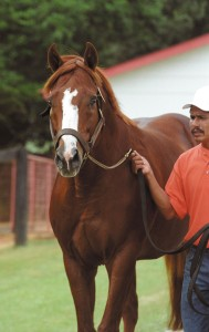 Ide at Clear Creek Stud.  © 2003 Barbara D. Livingston.  All rights reserved.