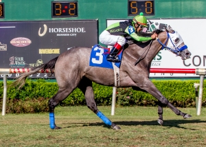 Jockey Jorge Guzman guides My Queen Olivia to victory in the 22nd running of the Elge Rasberry Stakes at Louisiana Downs.  Hodges Photography